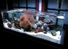 The 5 Aquariums That Will Make You Feel Underwater