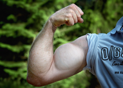 Can maca help to build muscle?