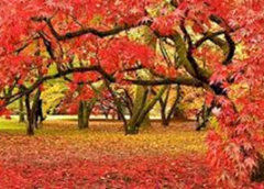 Where to See Britain's Natural Autumn Wonders