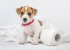 Things to Consider when Getting a New Puppy